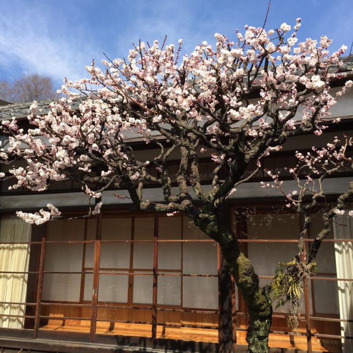 弥生三月02-本法寺-東京都文京区のお墓 永代供養墓 法要-