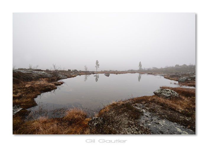 Brume et brouillard ( Temp 2° C )