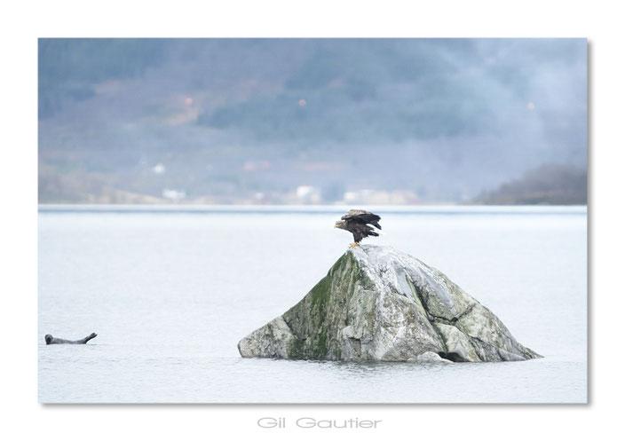Concurrence !! L'aigle et le phoque