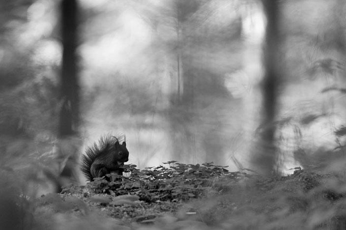 A la recherche du trèfle à quatre feuilles