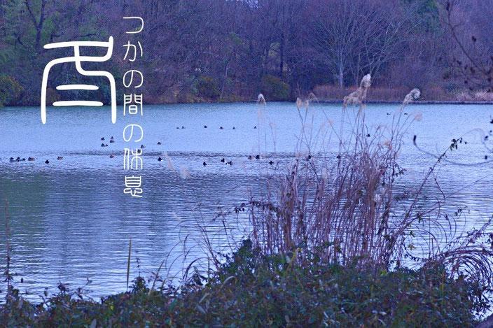 癒しの写真「湖」