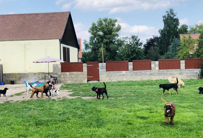Sandra Volland, Hundpension, Problemhundtherapie, Hundeschule, 90427 Nürnberg Neunhof