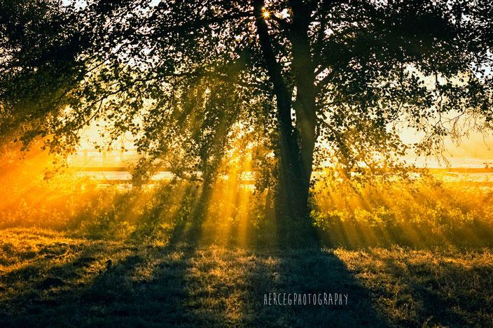 Baum, Sonnenstrahlen, Brandenburg, Rieselfeld