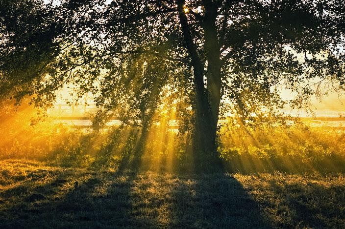 Goldener Baum, Brandenburg, Rieselfeld
