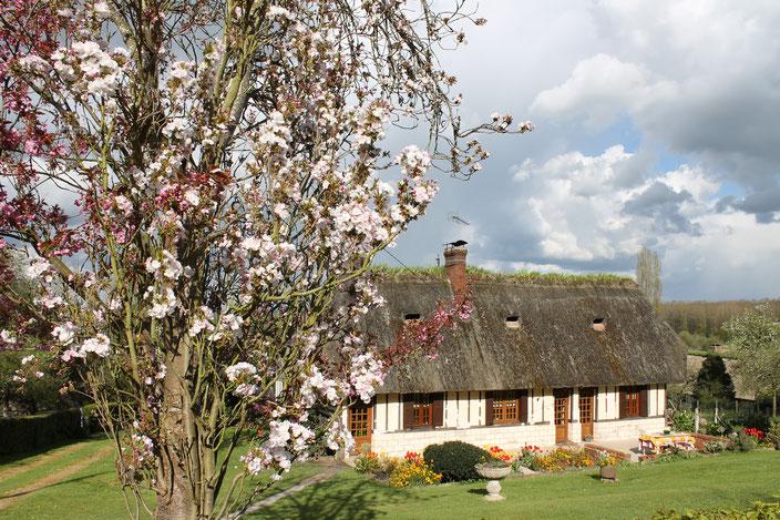 Maison à pans de bois et toit de chaume, caractéristique de la Route des Chaumières