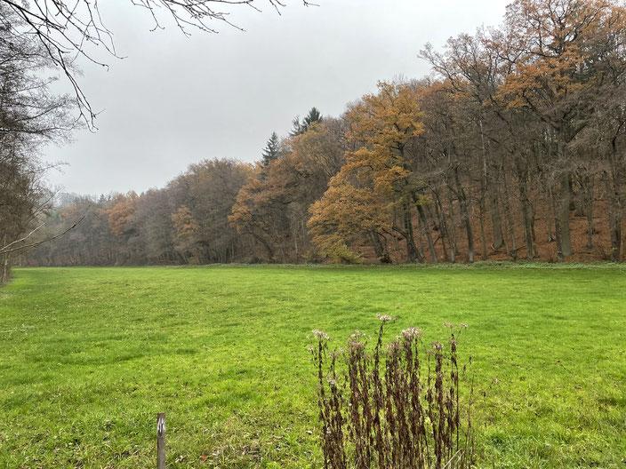 Die wertvolle HALM-projektierte Feuchtwiese. Am Waldrand entlang soll der Radweg mit wassergebundener Decke gebaut werden. Da ein grundhafter Aufbau aufwändig ist, werden sich die Kosten vervielfachen, der Boden verdichtet und Fauna und Flora geschädigt.