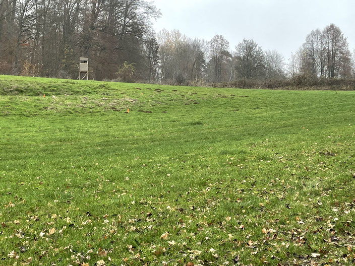 """An dieser Stelle ist der """"Aufstieg"""" zur geschotterten Straße nach Thalheim zu sehen, inklusive mehrer Absteckpfosten, die den voraussichtlichen Verlauf des Radweges quer durch den oberen Teil der Feuchtwiese provisorisch kennzeichnen."""