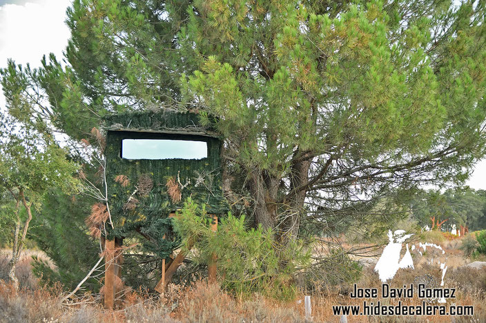 Nuestro hide es una torre situado en una dehesa salpicada de pinos