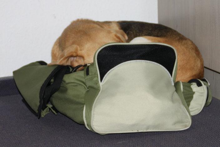 da kann man noch soviele Hundebetten mitnehmen, es muss immer was anderes sein!! :-)