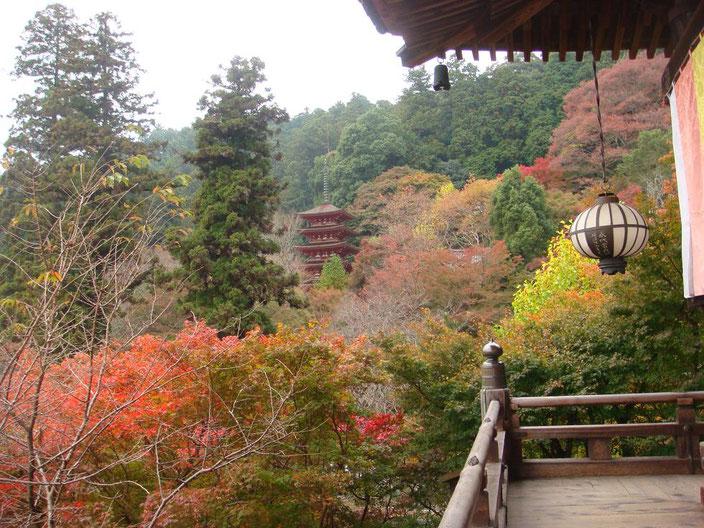 早朝の長谷寺の舞台から秋を一望