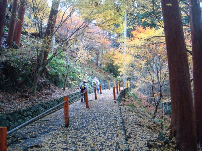 落ち葉の絨毯善峯寺参道