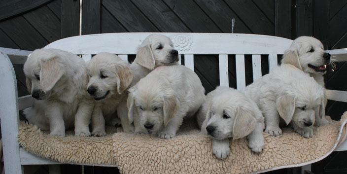 Onno (braun), Oskar (grün), Olga (gelb), Jette (rot), Onno (blau), Nala (orange), Balou (lila)