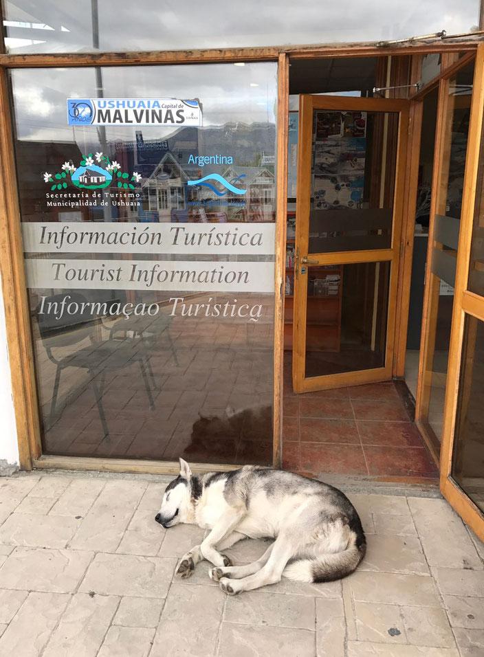 Freilaufende Hunde gibt es in Ushuaia überall. Vor der Touristeninformation hat es sich dieses niedliche Exemplar gemütlich gemacht.
