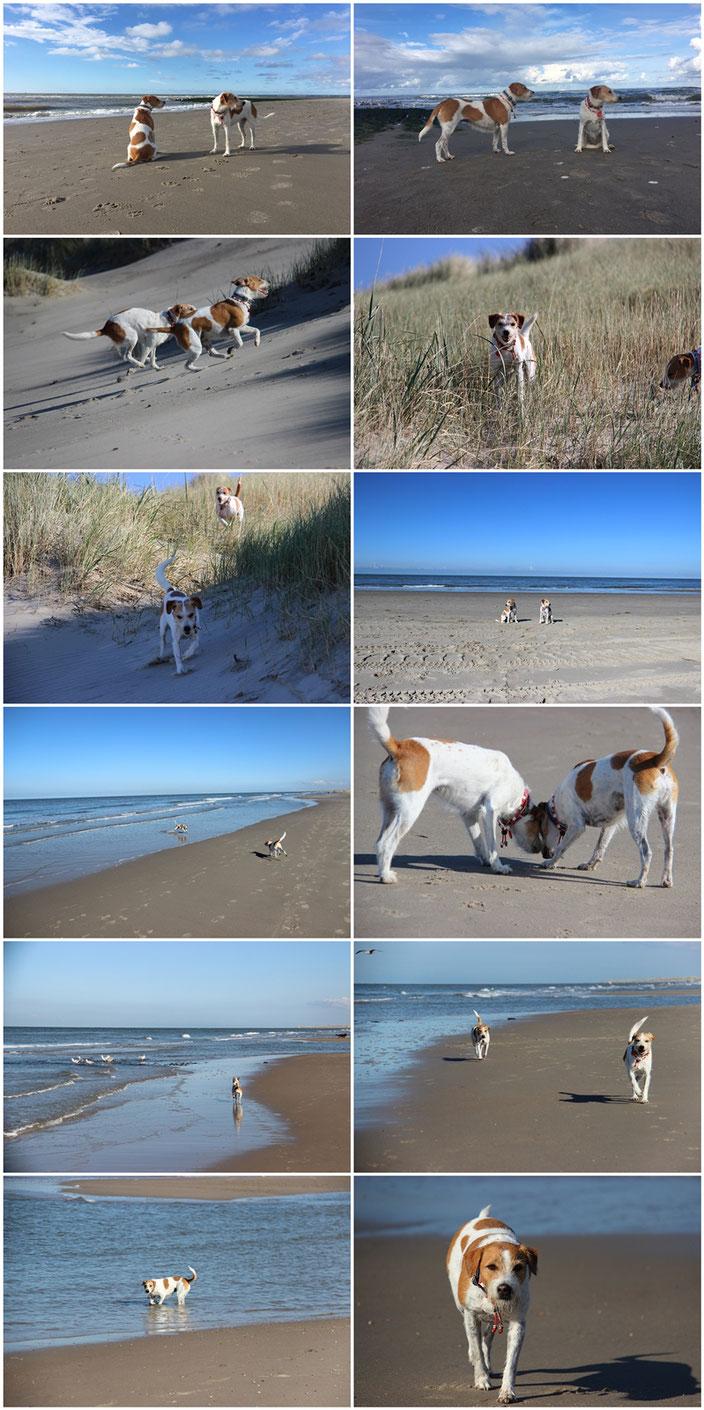 Urlaub in Holland - Kromfohrländer