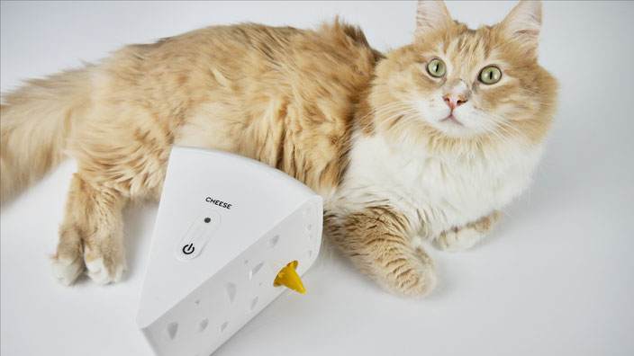 Katze beschäftigen mit batteriebetriebenen Katzenspielzeug