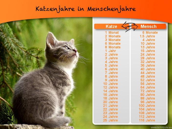 Katzenjahre in Menschenjahre - Tabelle - Katzenjahre in Menschenjahre umrechnen
