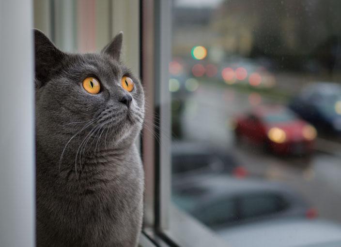 Katze alleine lassen - Katze schau traurig
