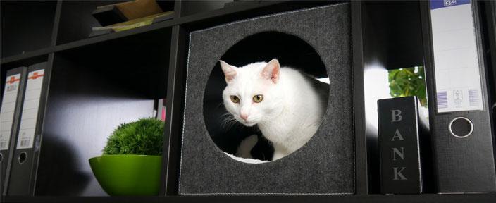 Katzenmöbel bieten Platz für Katze und Mensch