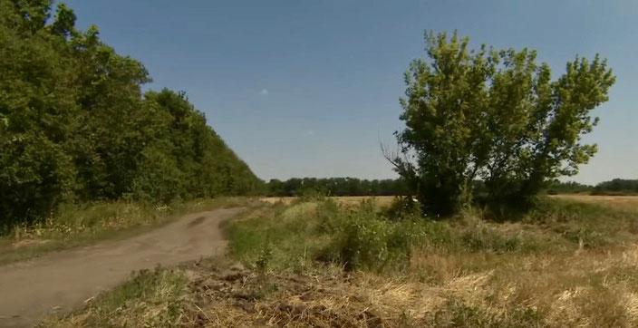 MH17 was shot from this wheat field at the height of this tree, the prosecution thinks.