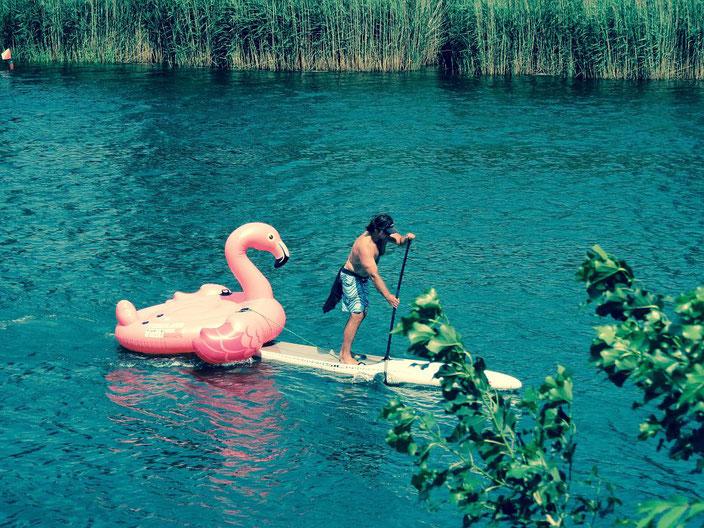 Stand up Paddler mit Flamingo im Schlepptau. Stand up Paddeling