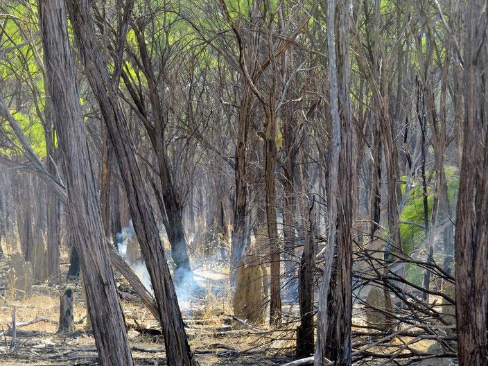 grenzenlosunterwegs Australien Darvin Camper
