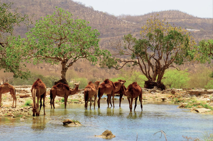 Oman Salalah Dhofar grenzenlosunterwegs