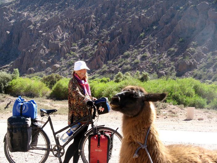Lamas machen vieles erträglicher