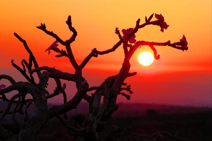 Oman Wüste grenzenlosunterwegs