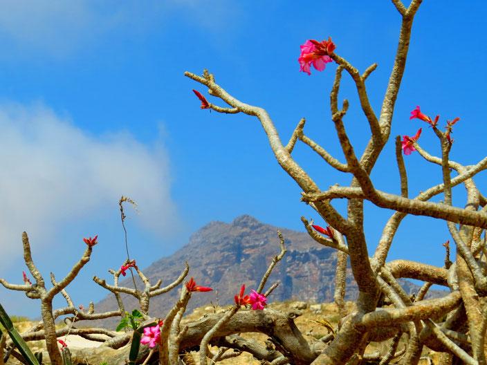 Oman Dhofar grenzenlosunterwegs