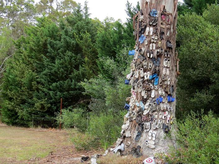 Latschenbaum Australien grenzenlosunterwegs