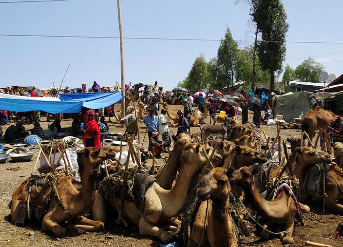 Kamele Äthiopien grenzenlosunterwegs