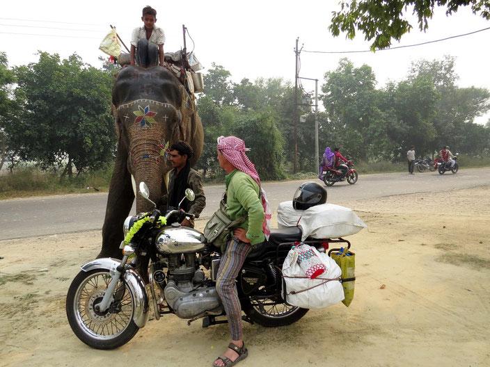 Elefant Enfield grenzenlosunterwegs
