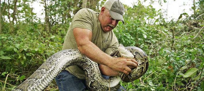 Ein ausgebildeter Python-Jäger verdient pro Meter Schlange 75 Dollar.
