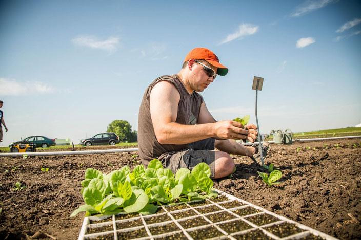 Der Molekularbiologe Paul South mit seinen neuen Tabakpflanzen. (Bild: L.Brian Stauffer / UI Public Affairs)