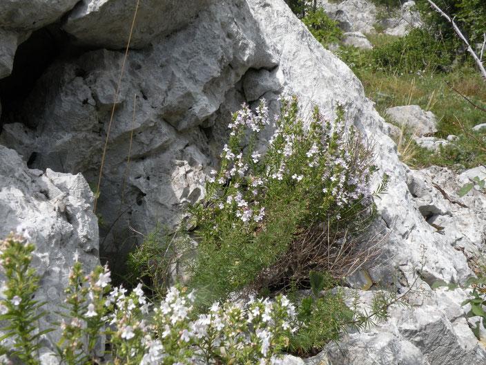 """""""Manche sehen nur die Felsen, andere die Blumen ..."""" Foto von Sylvana Pollehn"""