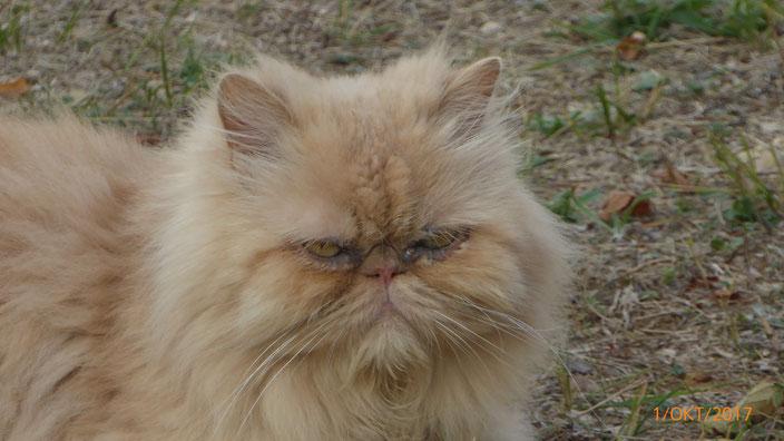 Und Grumpy Cat war auch da! ;)