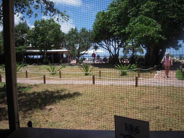 レストランから外の眺め。鳥が侵入しないようにネットが張り巡らされている。