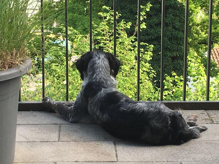 """Dog-TV: es läuft grad die Sendung mit den Vögeln :-)  Mein Hobby """"beobachten"""" kann ich auch zu Hause ausleben"""