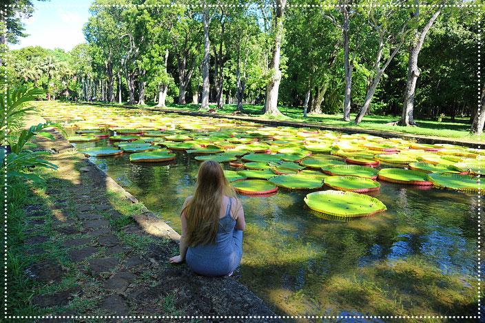 Pamplemousses Garden Mauritius Sehenswürdigkeiten Highlights