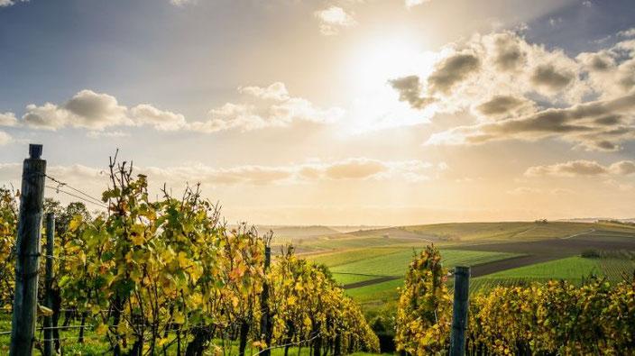 paysage vigne
