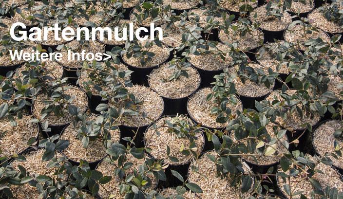 Miscanthus Wiedemann Mulch in Blumentöpfe