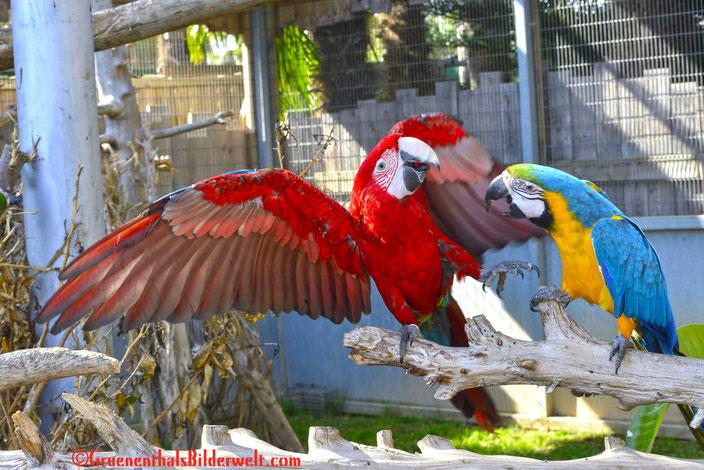 Zoo Aventura Benicarlo