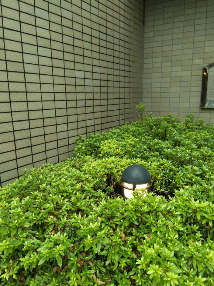 植栽内の電灯のライトを交換@菱和パレス中目黒管理組合ブログ
