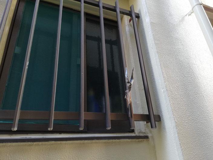窓の格子につけられたアラクサイワシ
