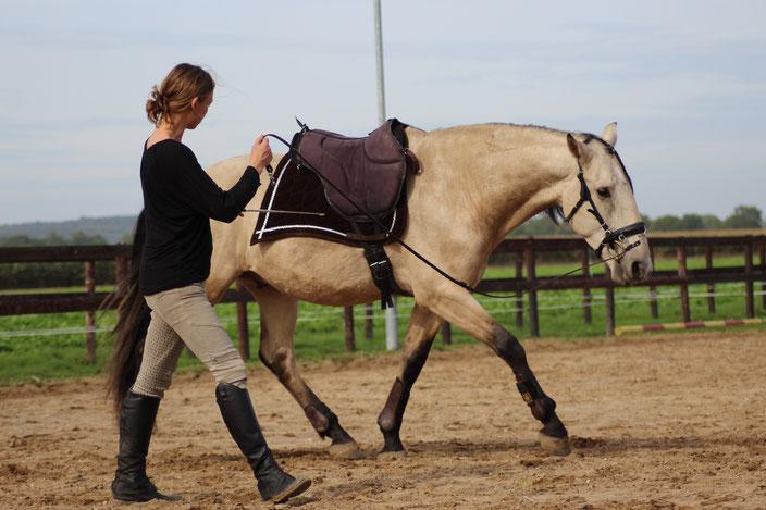 Paard longeren zonder hulpteugels, Academische rijkunst