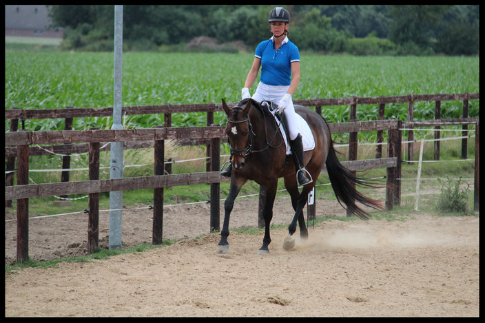 Horizontale balans paard, Academische rijkunst, dressuur