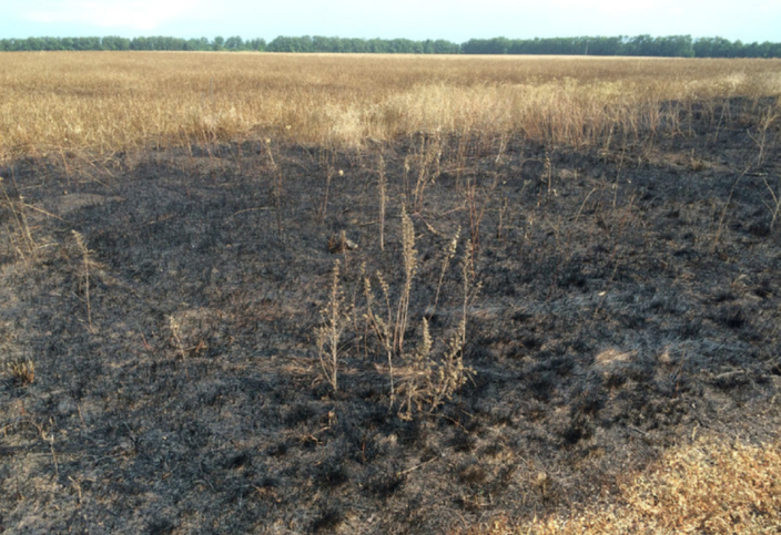 Scorched wheat photo Christopher Miller in area of alleged Buk launch location