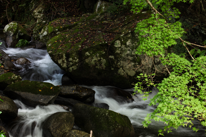 "Canon EOS 5Dmk2 Canon EF 70-300mm F4-5.6 L iso100 100mm f8 1/5"" M photo : toshimasa"