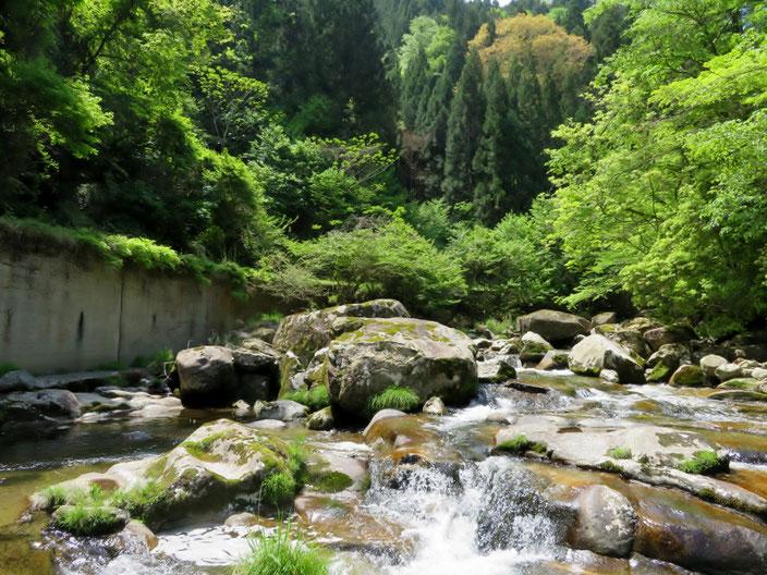 本格的な渓流。