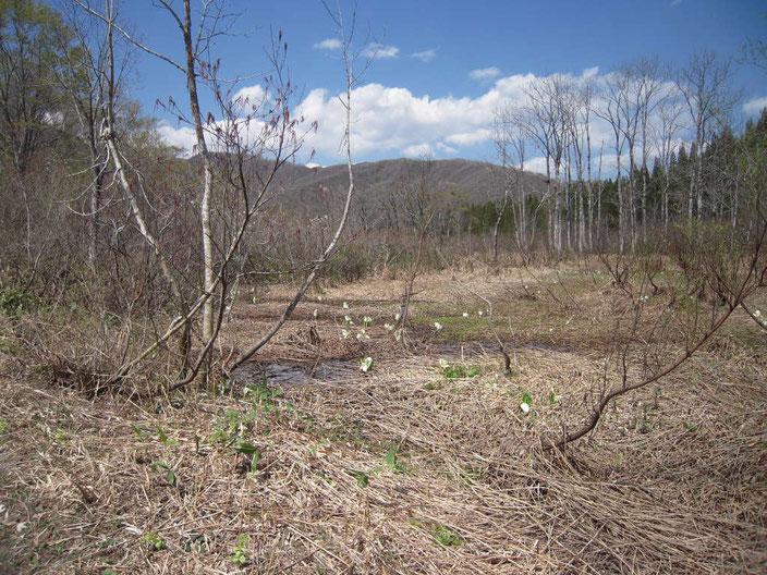 小坂谷の高層湿原。
